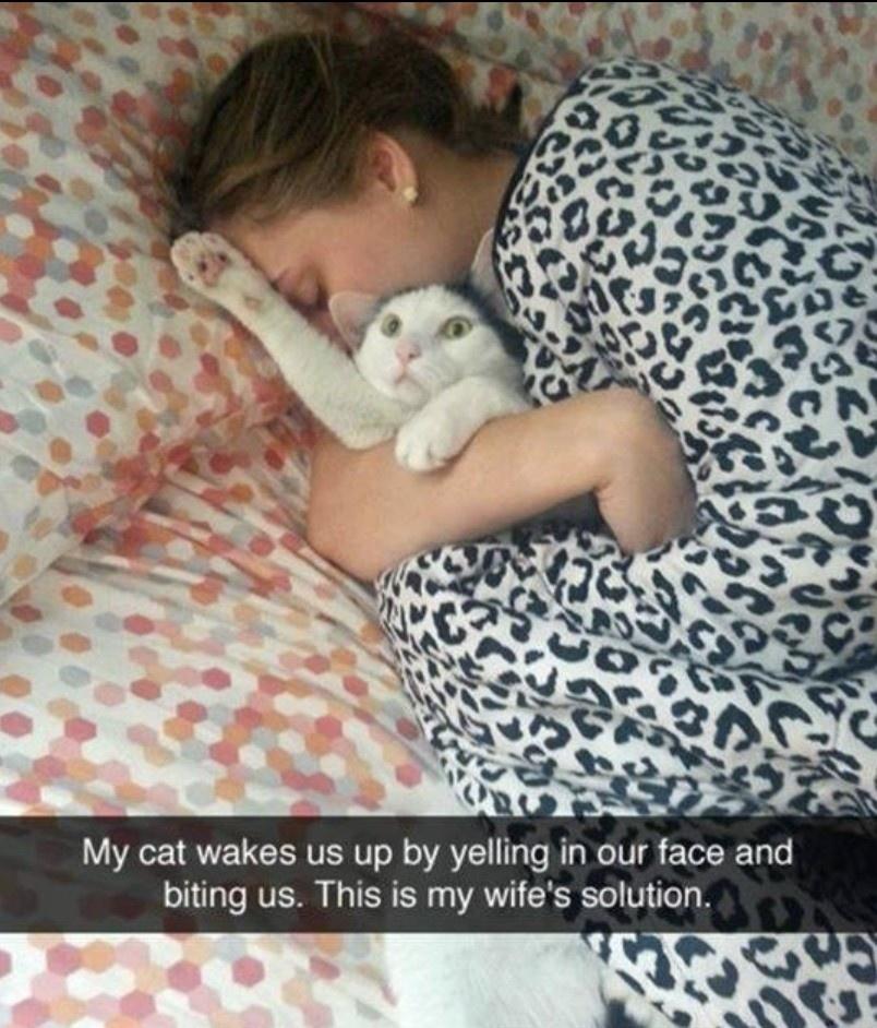 My cat always bites me
